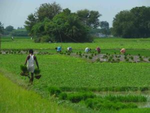 how to earn money with agri business