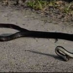 Snake Suicide | Amazing Video | Don't Miss It | Real Vide