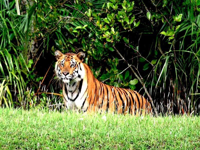 Sundarban National Park Tourism (2020) Tiger Reserve, Wildlife Sanctuary