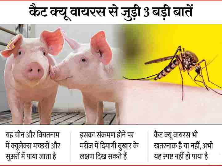 Cat Que Virus Icmr Warns Of Another Chinese Virus Which Could Spread Disease In Country All You Need To Know About Cat Que Virus