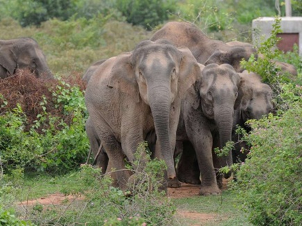 Nine year old girl crushed by wild elephant in sonbhadra