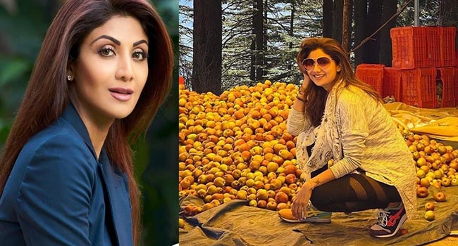 Shilpa Shetty shared a throwback picture, wrote - I and my patience have a lot of fruits