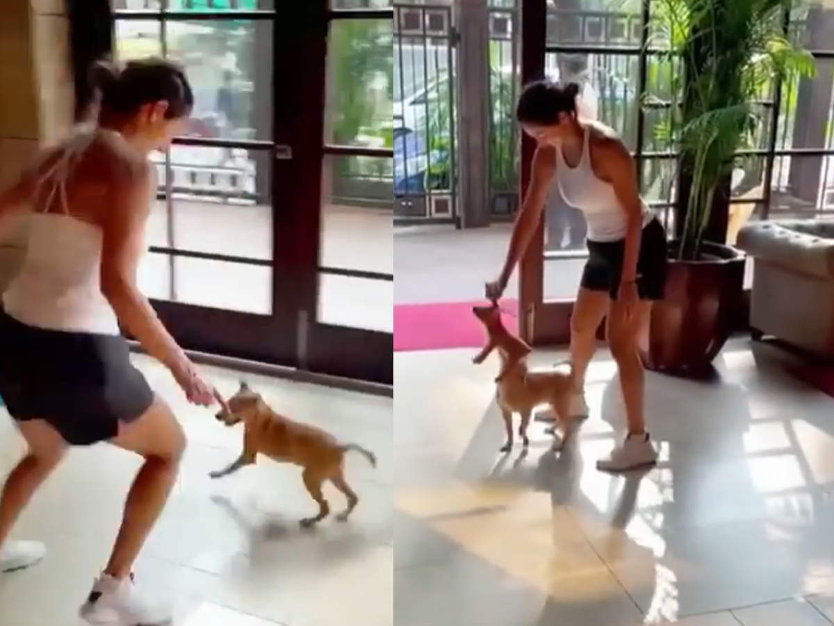 Malaika Arora harassed Doggy by showing soft toy