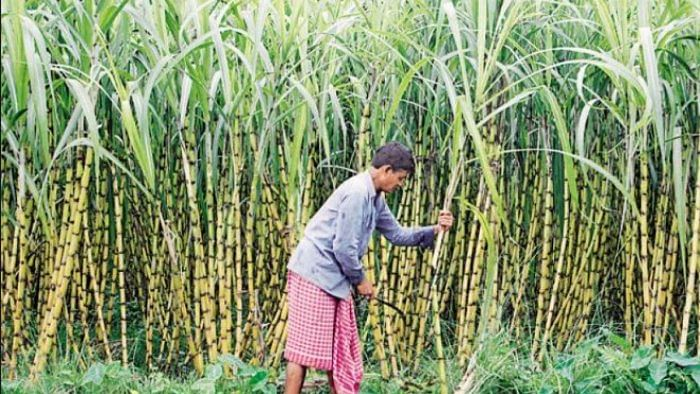 Sugarcane farmers in Kushinagar have not yet received compensation